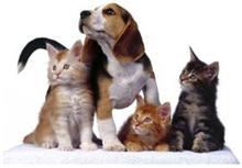 Clínica Mascotas