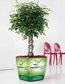 Rentaplant crea 3 nuevos conceptos