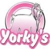 Yorkys
